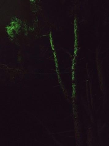 Felix Weinold | Nacht 1 (Serie Romantische Bilder: Bäume).