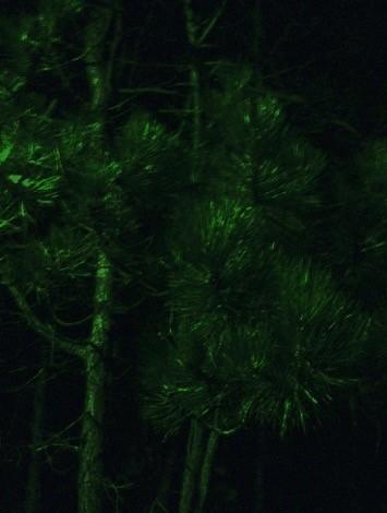 Felix Weinold | Nacht 3 (Serie Romantische Bilder: Bäume).